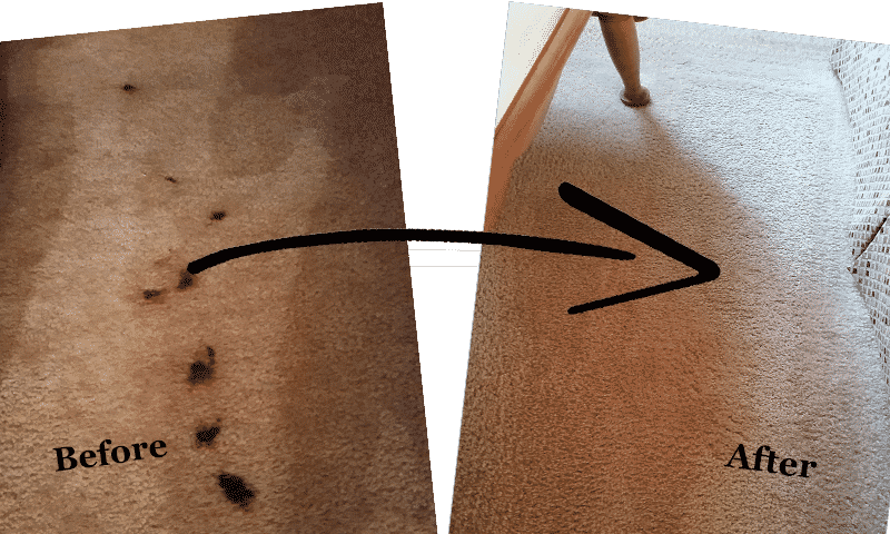 carpet pet stain removal and cleaning galveston - before and after
